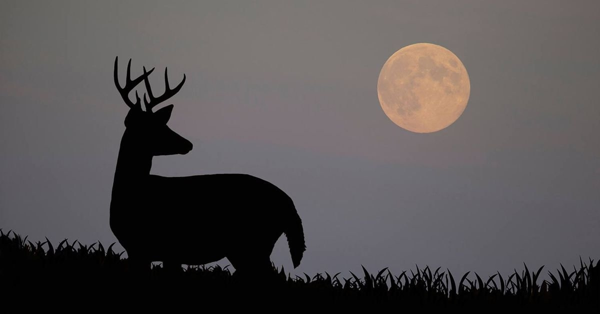 How Moon Phases Will Impact Deer Hunting During The Rut This for Moon Phase Deer Activity
