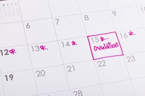 Ovulation Calculator | Download Your Ovulation Calendar regarding Calander Baby Due Month Graphics
