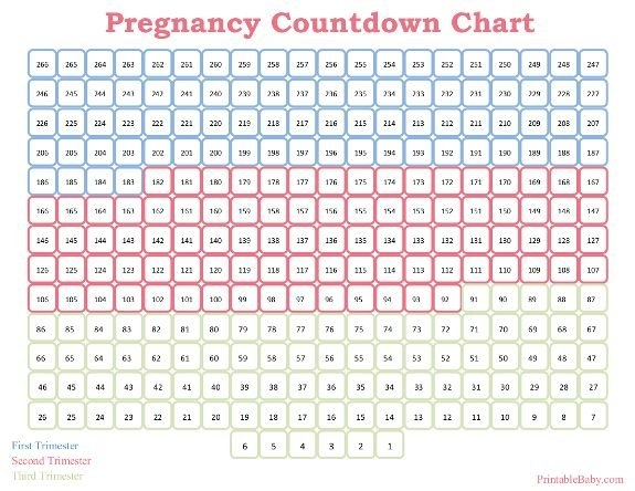 Pin On Printable Baby Charts with regard to Free Baby Due Date Calendar Template Photo
