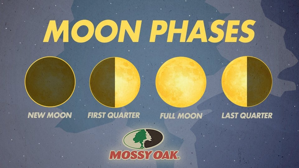 The Effect Moon Phase Has On Hunting Deer | Mossy Oak in Deer Movement Moon Phase Calendar Graphics