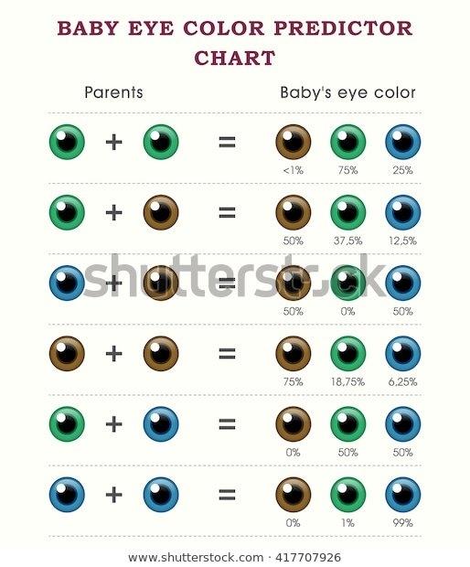 Baby Eye Color Predictor Chart Template Stock Vector with regard to Baby Prediction Calendar Template