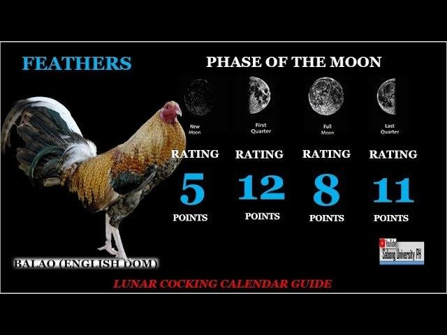 Gabay Para Manalo: Lunar Cocking Calendar - Youtube in Lunar Cocking Calendar Image