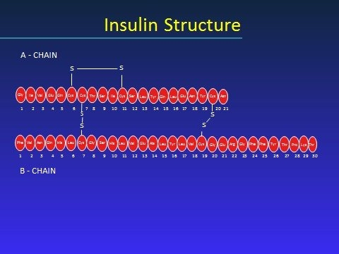 Insulin – Pharmacology, Therapeutic Regimens, And Principles pertaining to 28 Day Rule Explain Open Vial