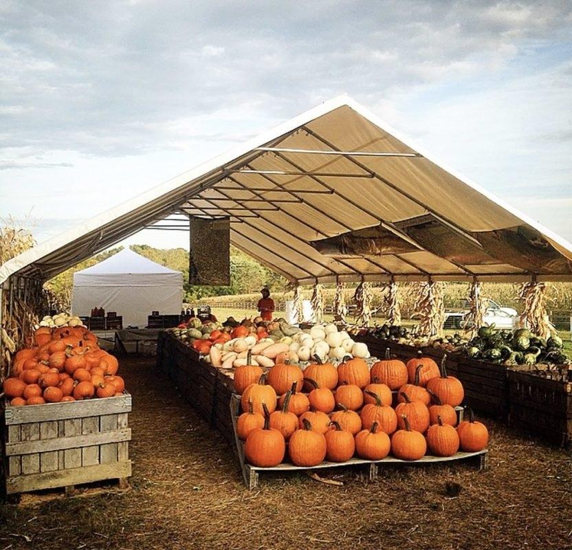 Pumpkin Festivals And Farm Events To Fill Your Fall Calendar with regard to Timonium Fairgrounds Calendar Image