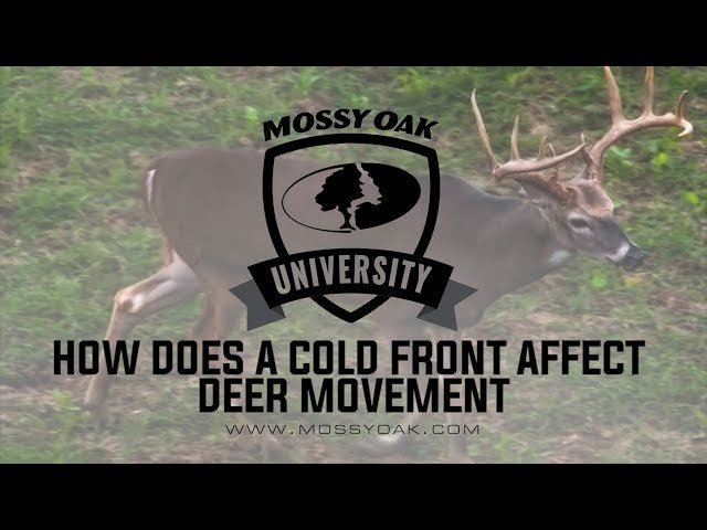 Understanding Whitetail Deer Movement | Mossy Oak within Whitetail Deer Activity Image