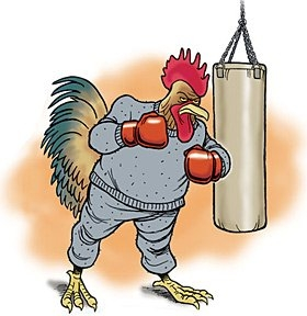 Cock Fighting In Mexico: Culture Or Cruelty? in Cockfight Calindar