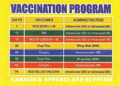 Sabong   Cockfight: Vaccination Program within Cockfight Calindar Photo